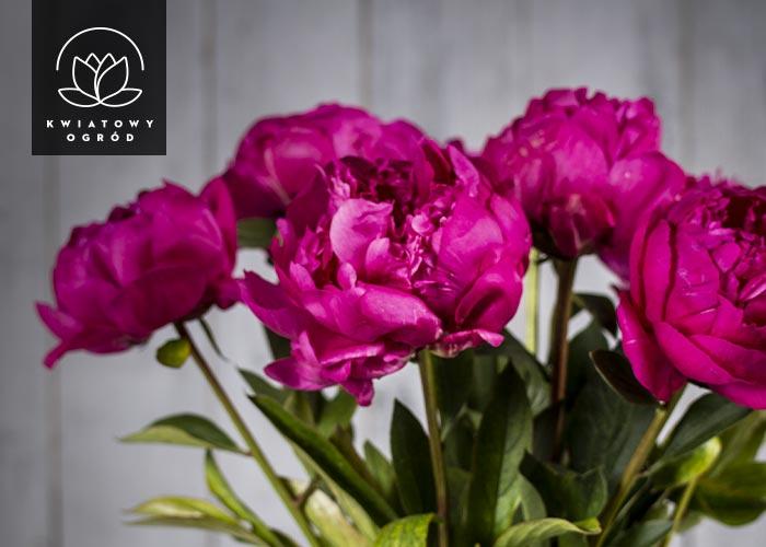 Zamów piękne i świeże kwiaty z dostawą kurierem.