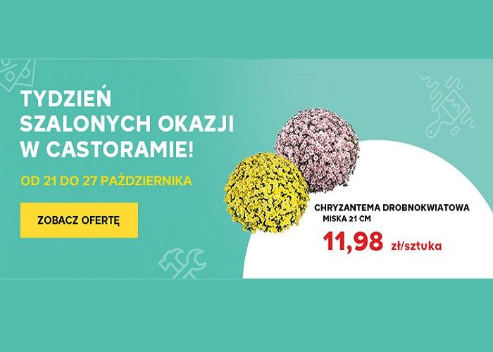 Chryzantema drobnokwiatowa za jedyne 11,98 zł!